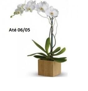 orquídeas.jpg